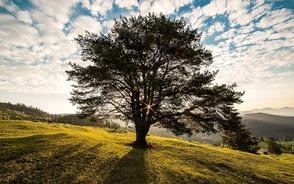 L'arbre de vie, atelier de développement personnel | 13 mars 2020 à Rouen